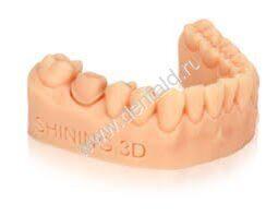 Shining 3D Resin Dental Model