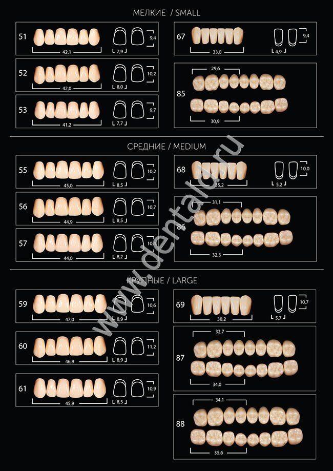 Карта зубов Expert 2