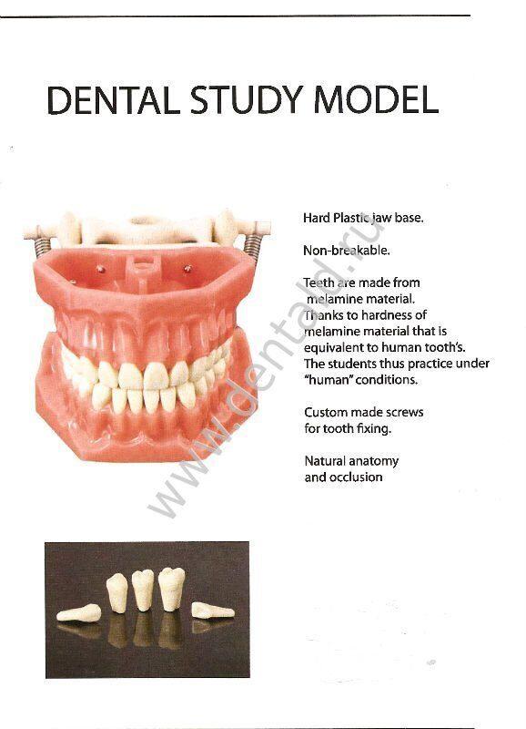 DENTAL-STUDY-MODEL