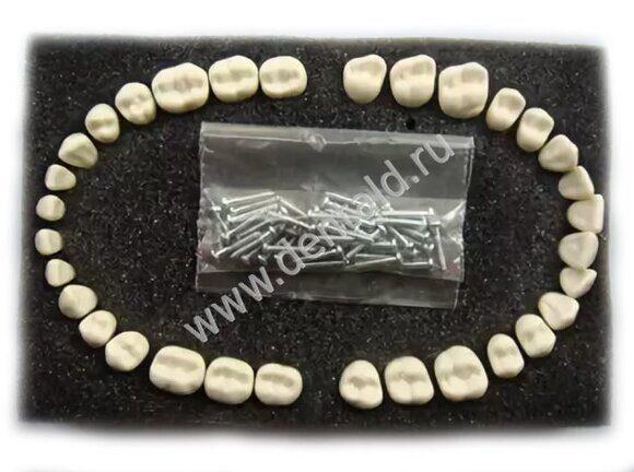 Arma Dental Teeth 32
