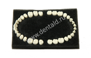 TEETH MODEL COMPATIBLE COLOMBIA MODEL